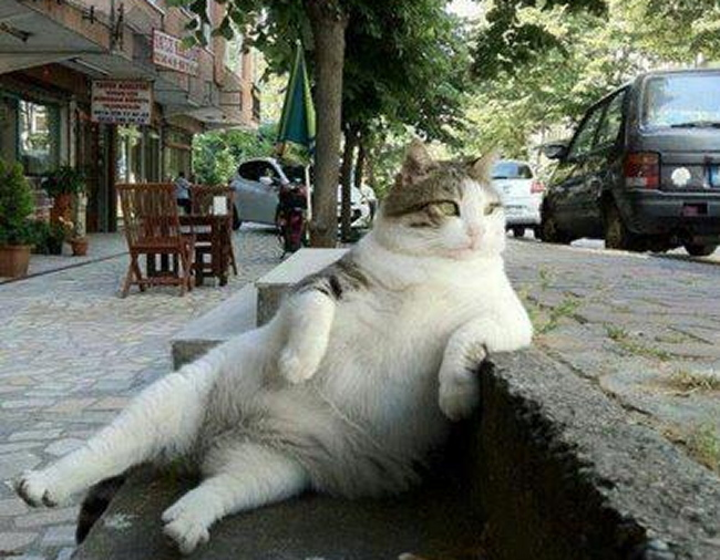Chat Furieux le forum de benoît viard • afficher le sujet - l'homme et le chat !!!
