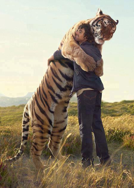 homme tigre