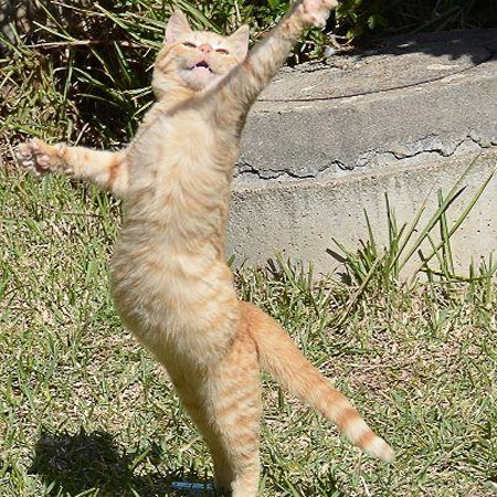 chat qu danse
