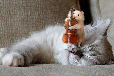 chat soursi violon