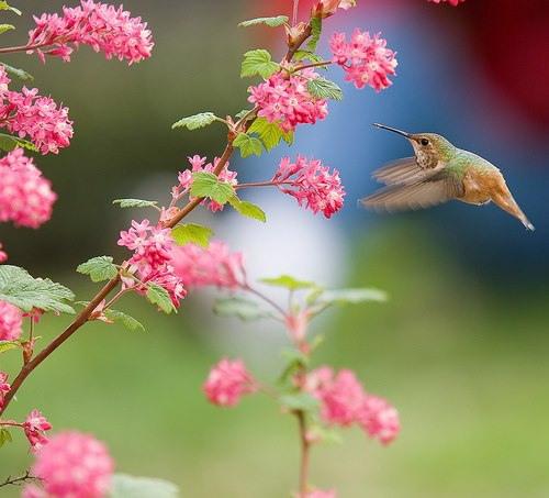 fleurs oiseau