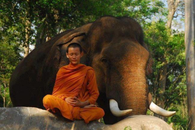 moine éléphant
