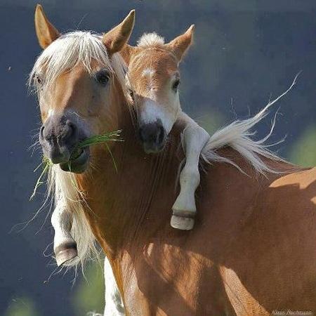 bébé cheval
