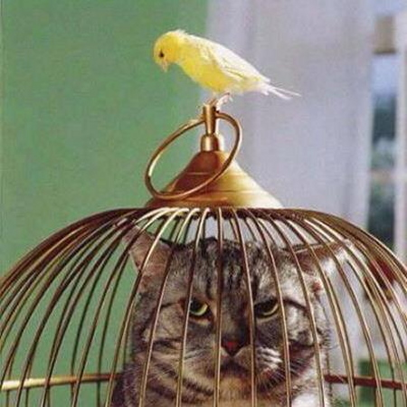 chat cage