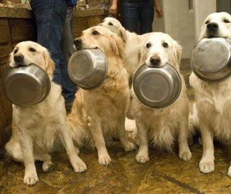 chiens gamelles