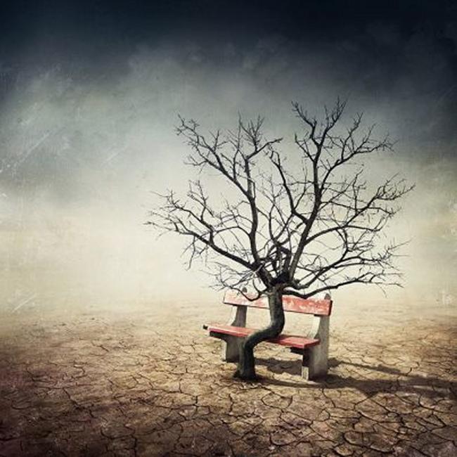 arbre assis