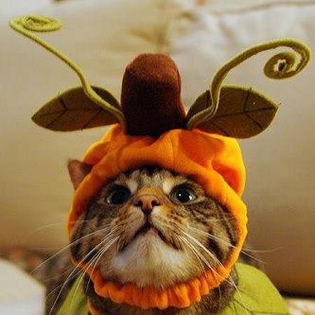 chat végétal