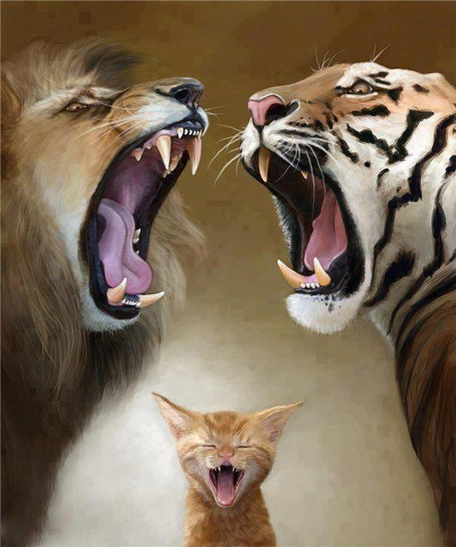 Tigres et chat
