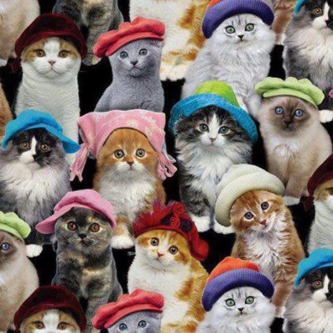 chats chapeu