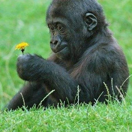 singe fleur