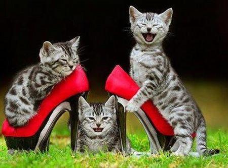 chats talons
