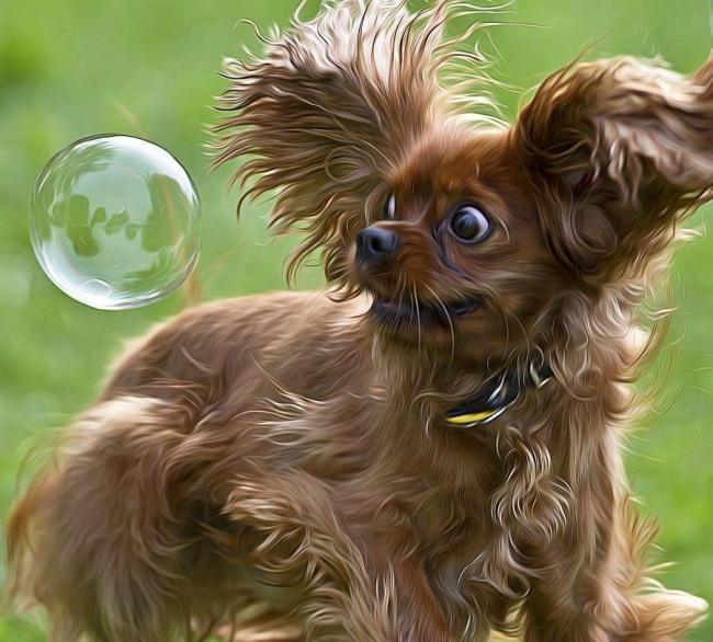 chien bulle