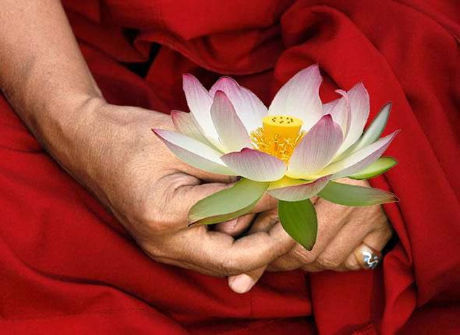 Moine lotus