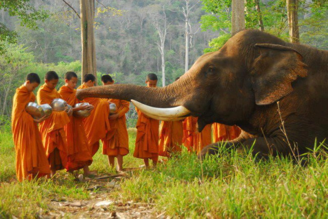 Moinillons éléphant