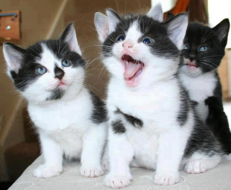 Chatons qui rient