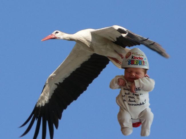 Cigogne et bébé