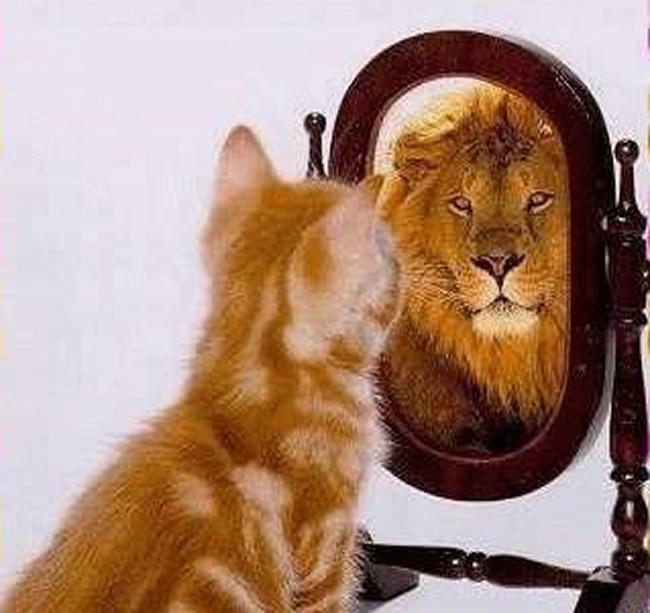 [Jeu] Association d'images - Page 20 Chat-lion