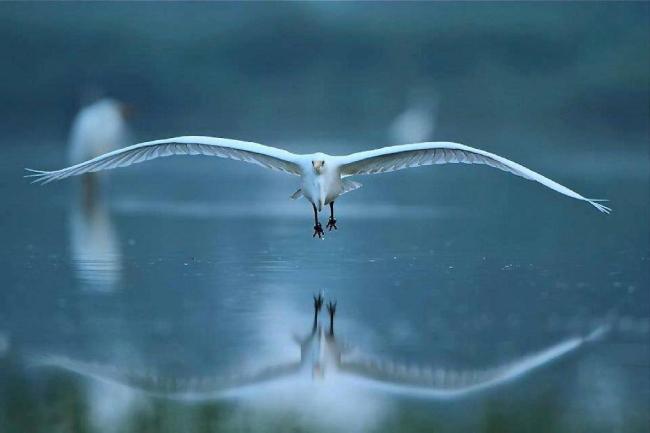 Oiseau miroir