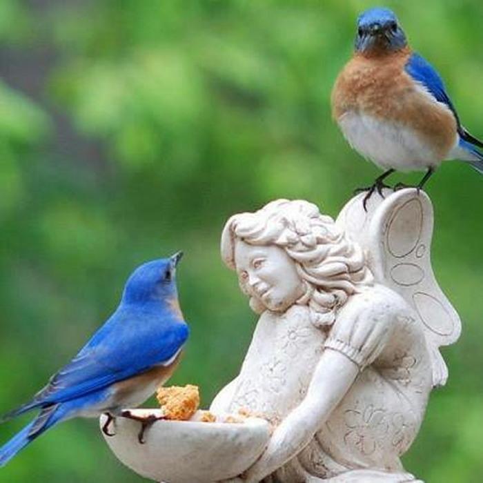 ange oiseaux