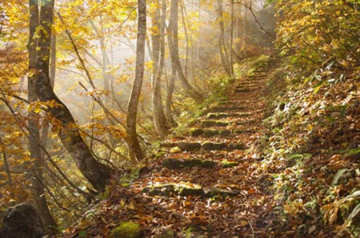 Escalier forêt